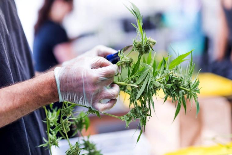 cannabis business funding goals