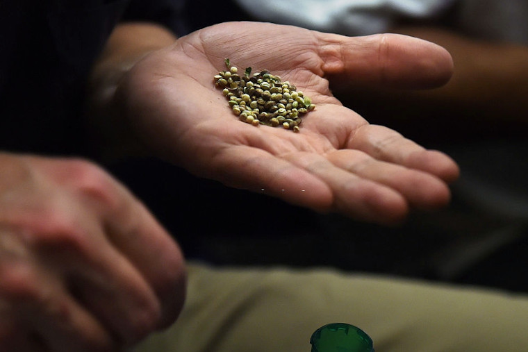 How to Start a Marijuana Seed Bank Business Part 1