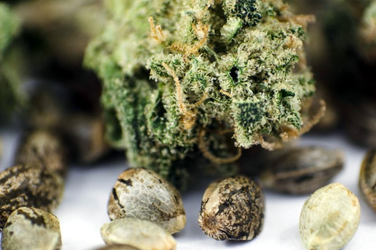 marijuana seeds and bud picture